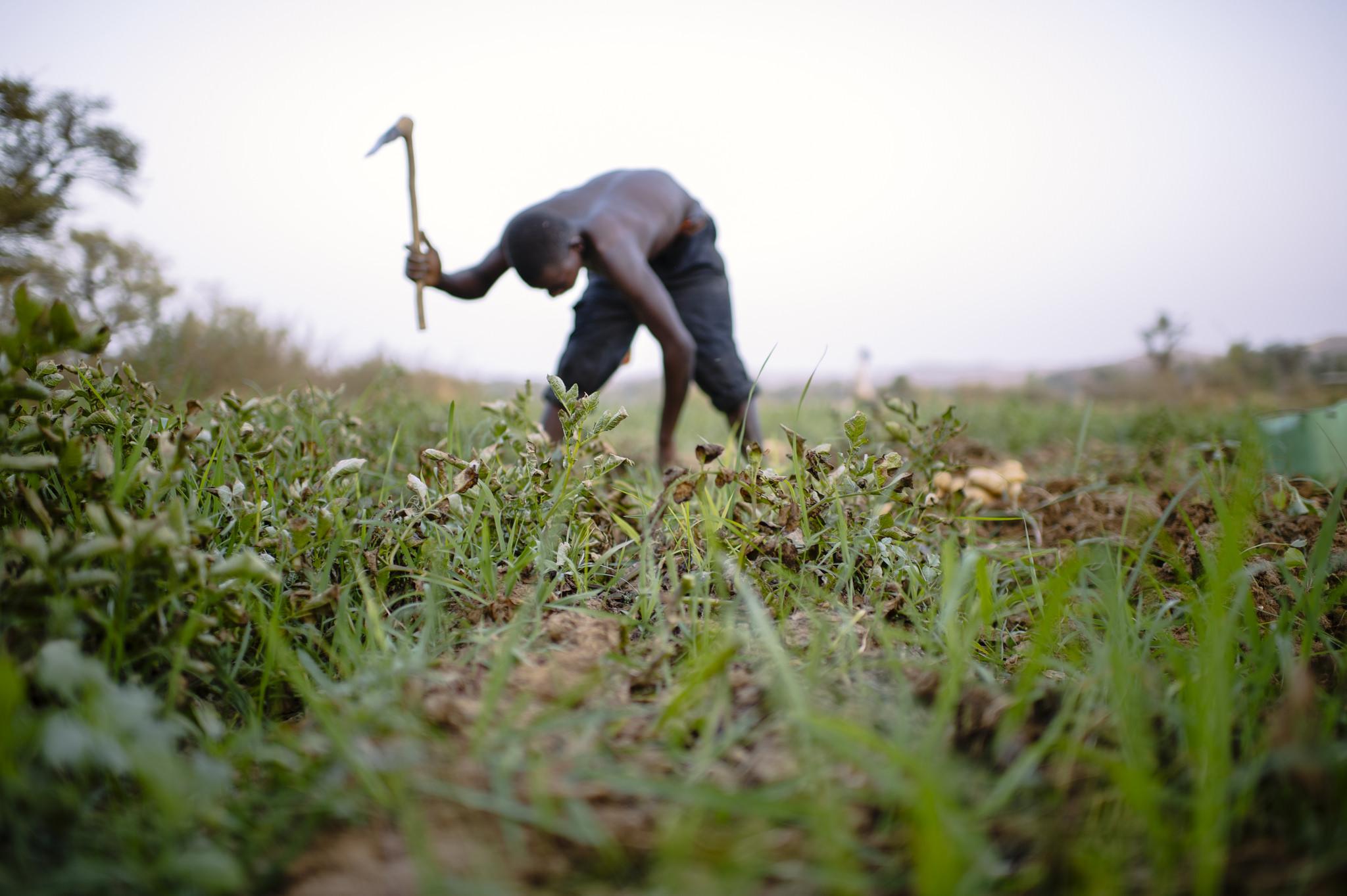 Gardening near Lake Bam