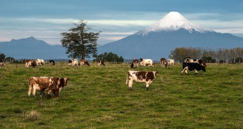 Osorno Volcano, Lake Region, Chile