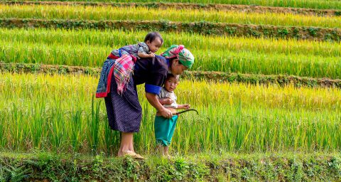 Mother and kids in rice fields
