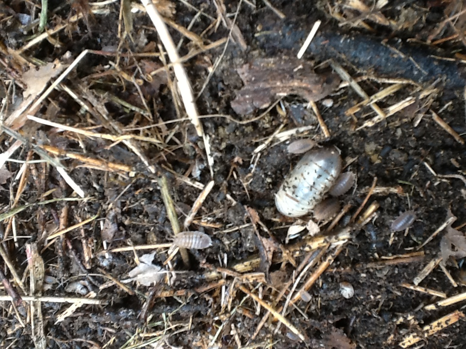 Bugs and grubs in the soil