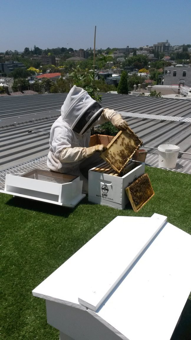 Bee keeping on top of a building in Melbourne