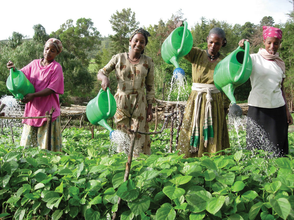 Farmers watering their crops with watering cans