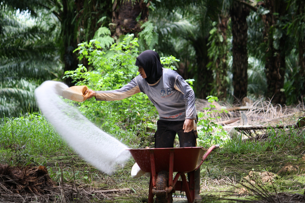 Farmer apply fertiliser to crops