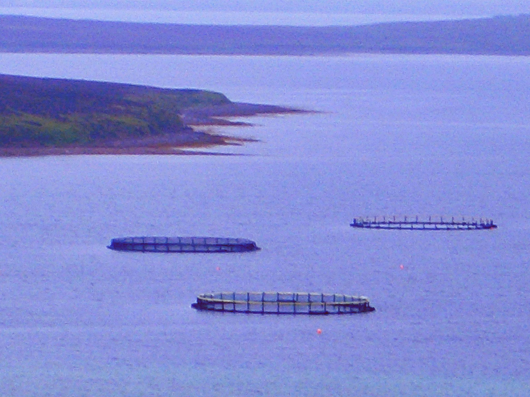 A salmon fish farm off the coast of Orkney, Scotland