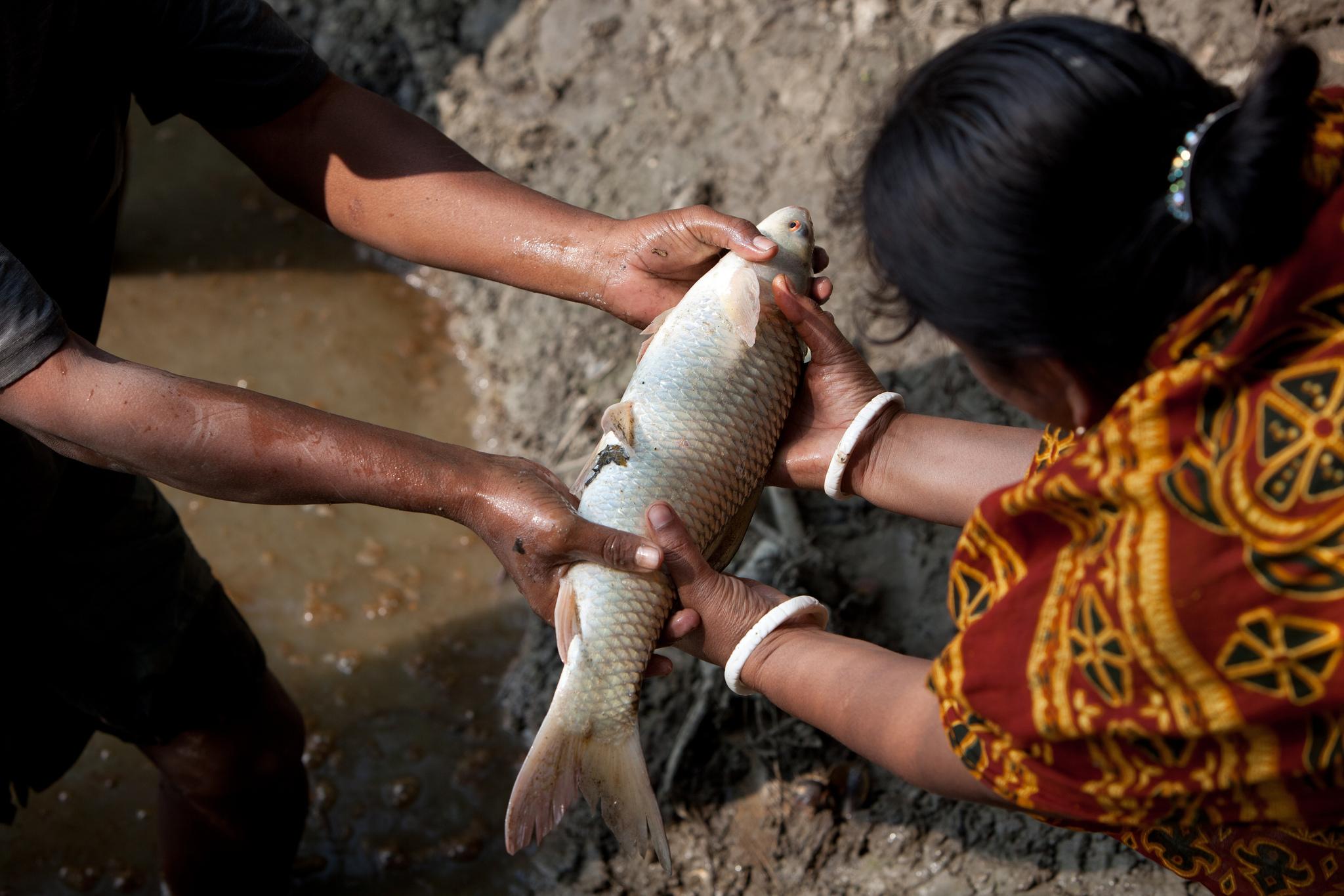 A Bangladeshi woman holding a fish