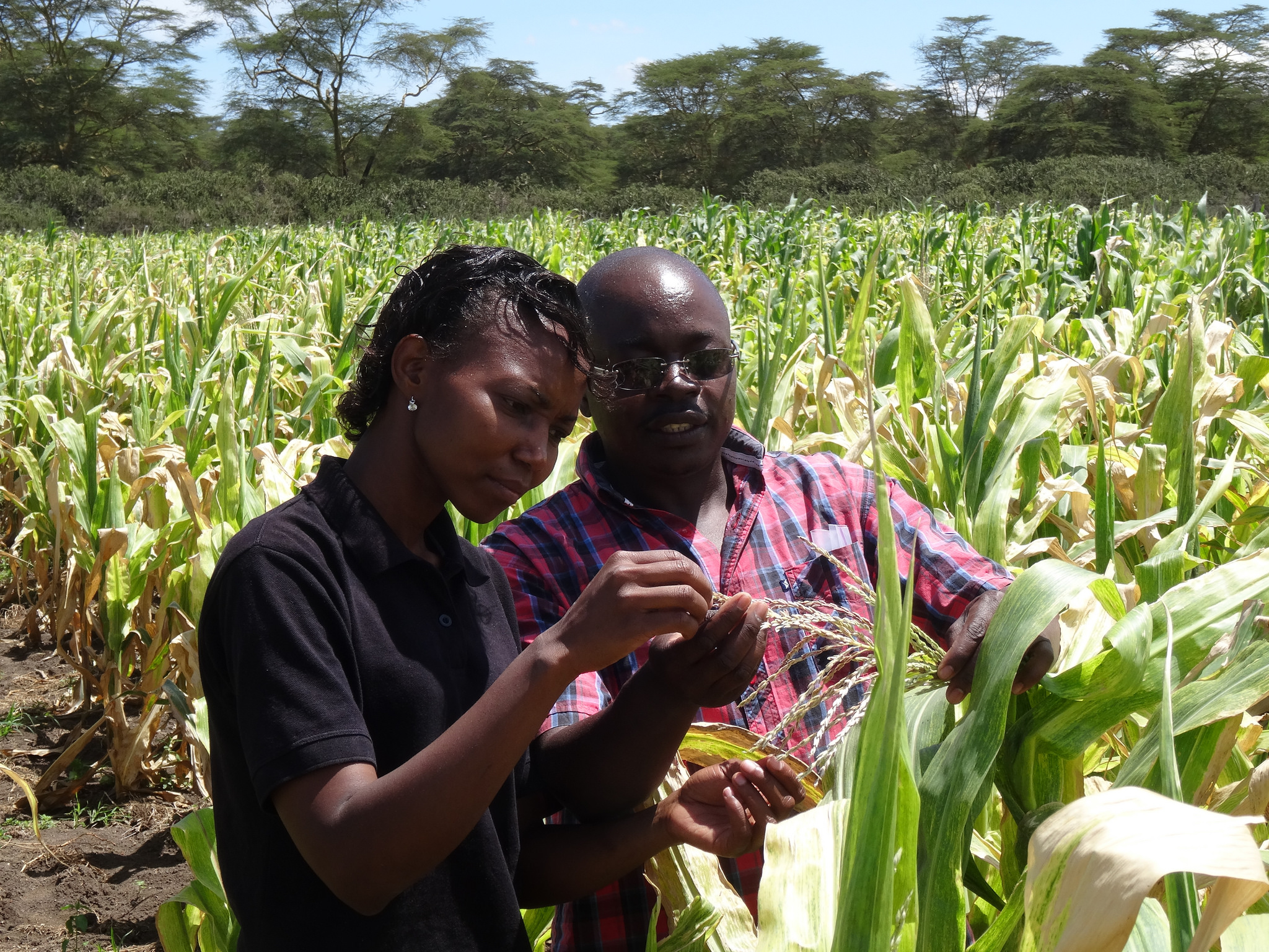 African scientists working in the field