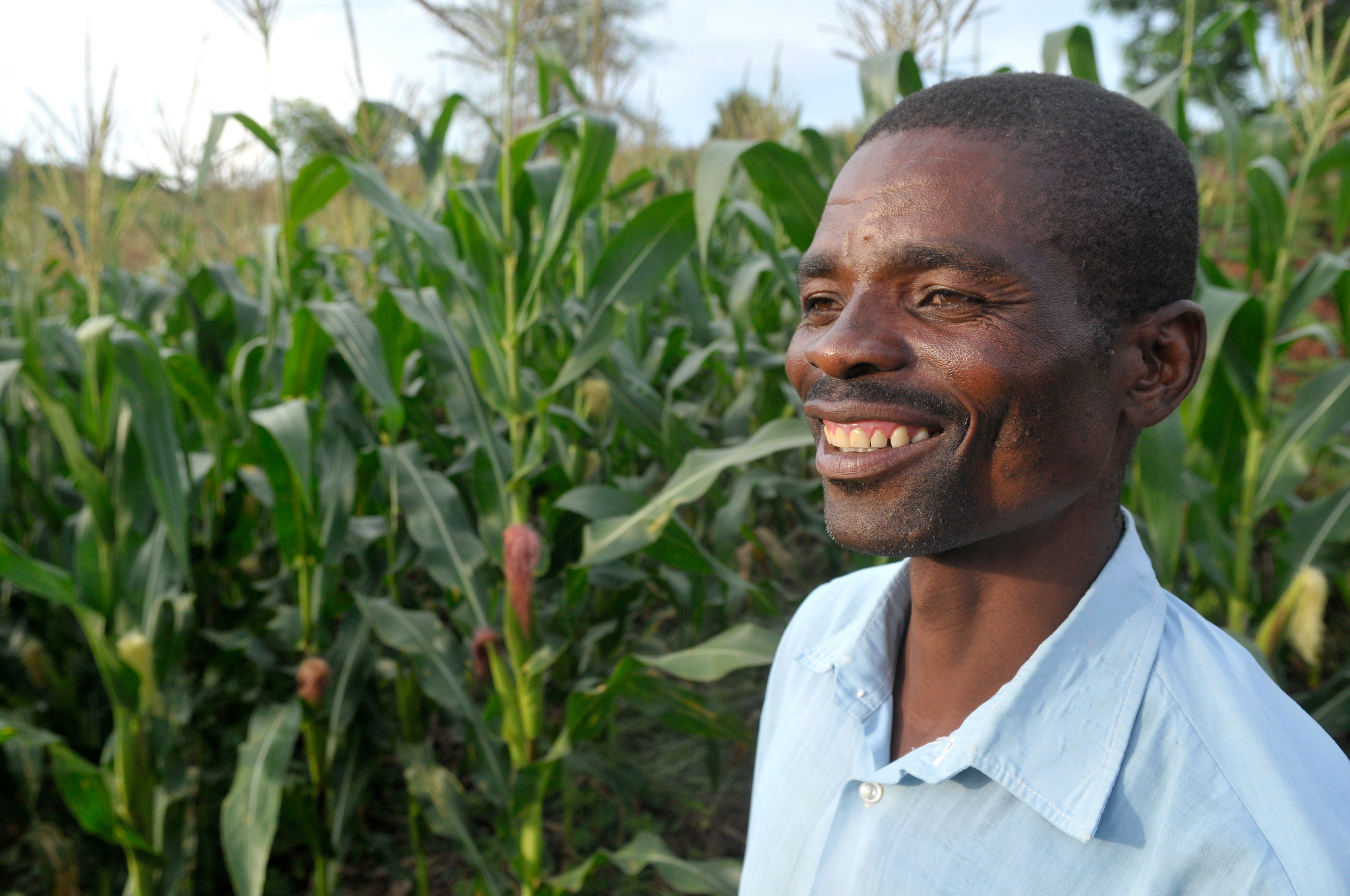 A Malawian farmer in a field