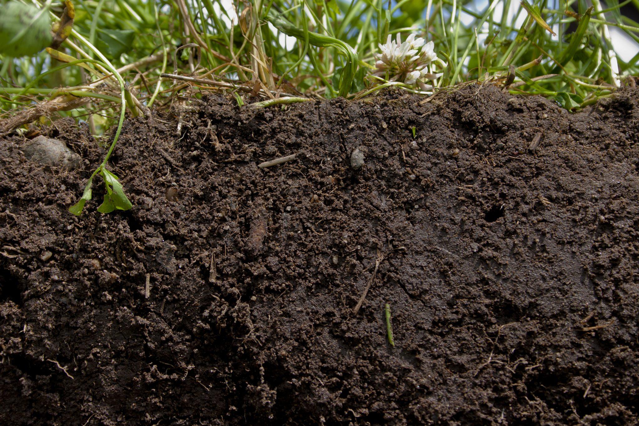 The soil beneath grass