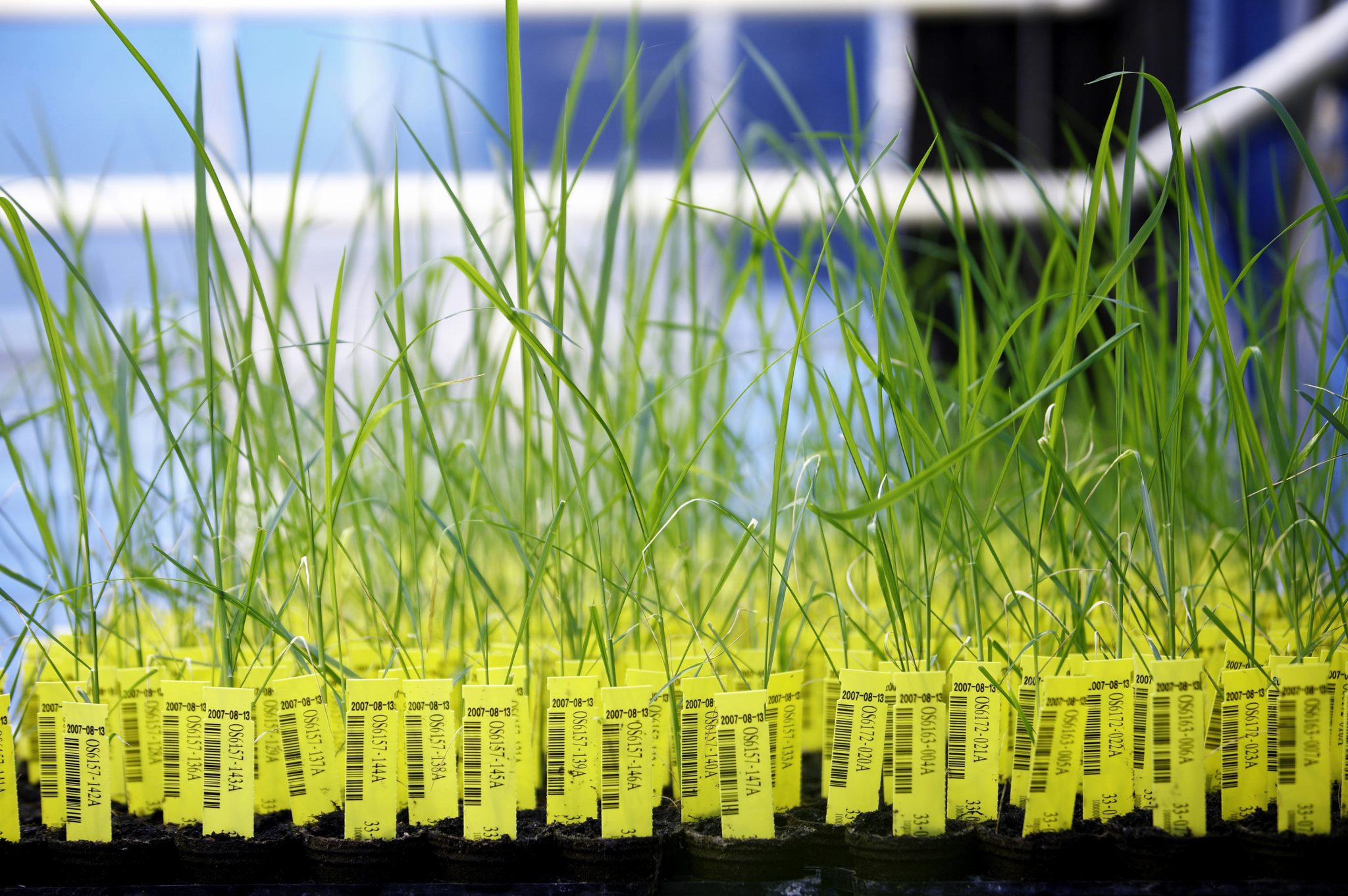Small-scale trials of GM crops