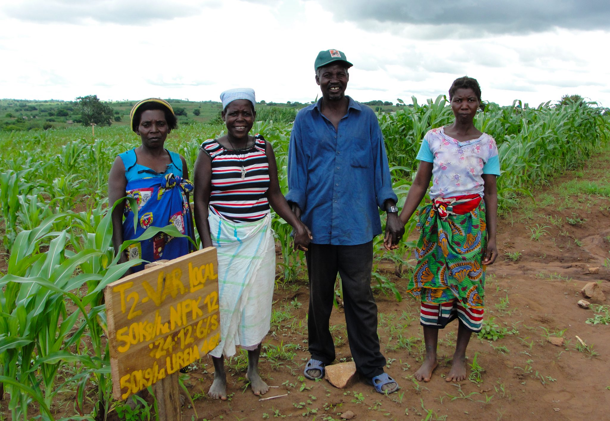 A test maize plot in Mozambique