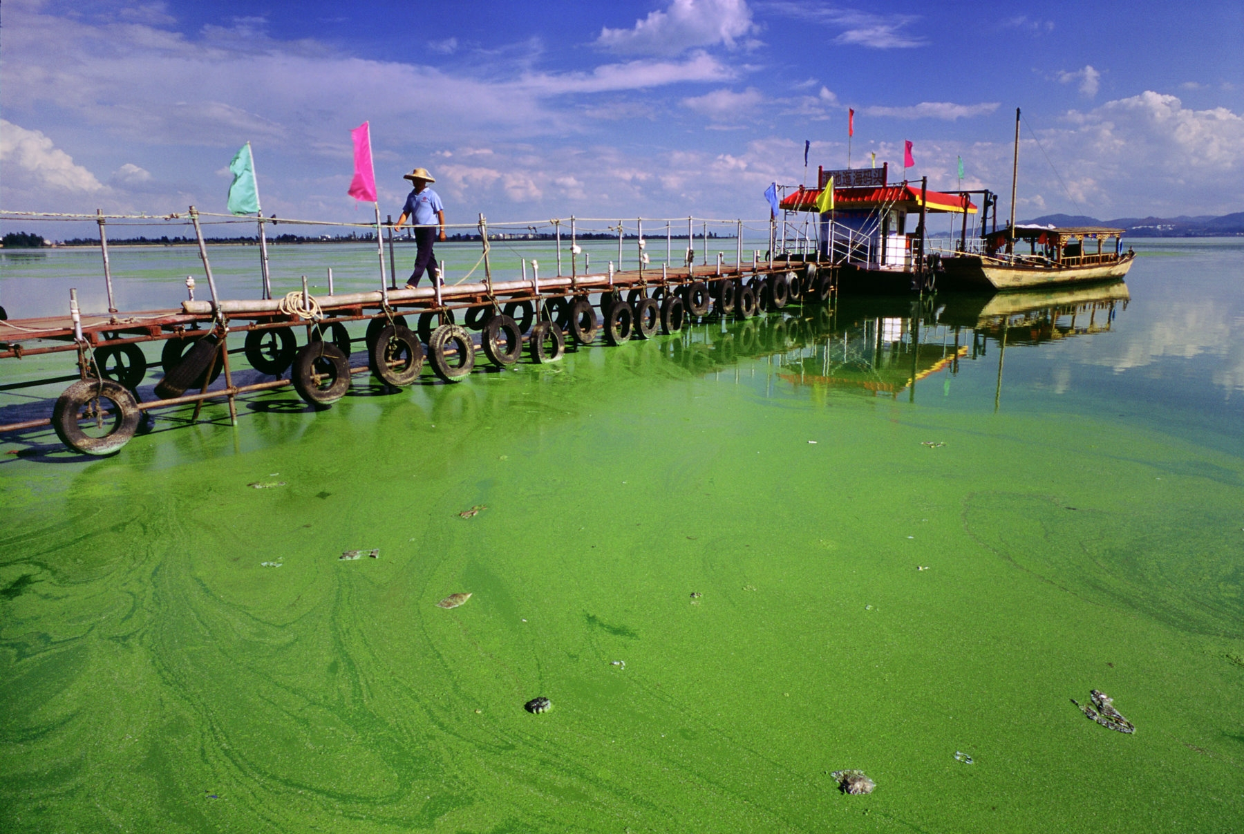 An algal bloom in Dianchi Lake, China