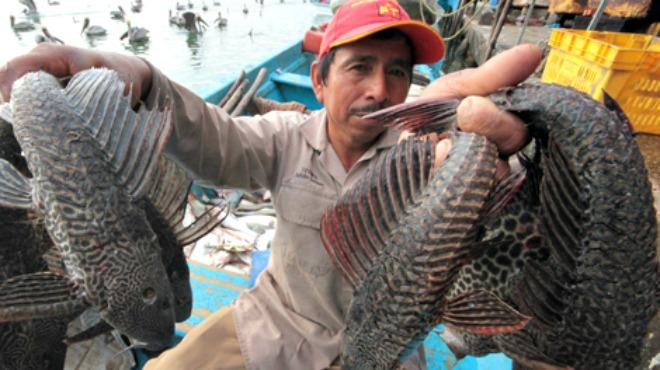 Fisherman in La Villita, Michoacan displaying a catch of non-native plecostomus fish