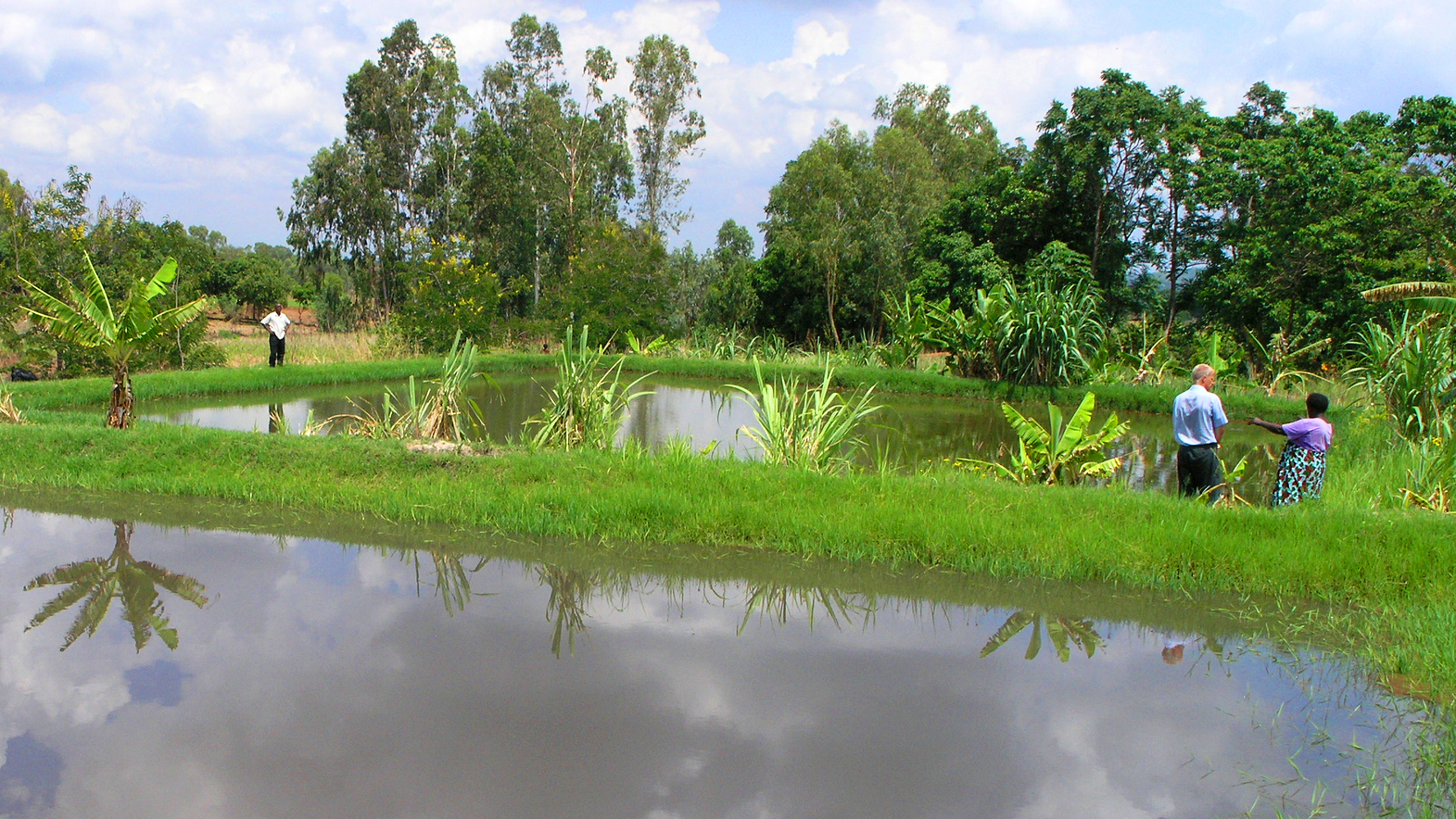 Fish farm next to crop fields