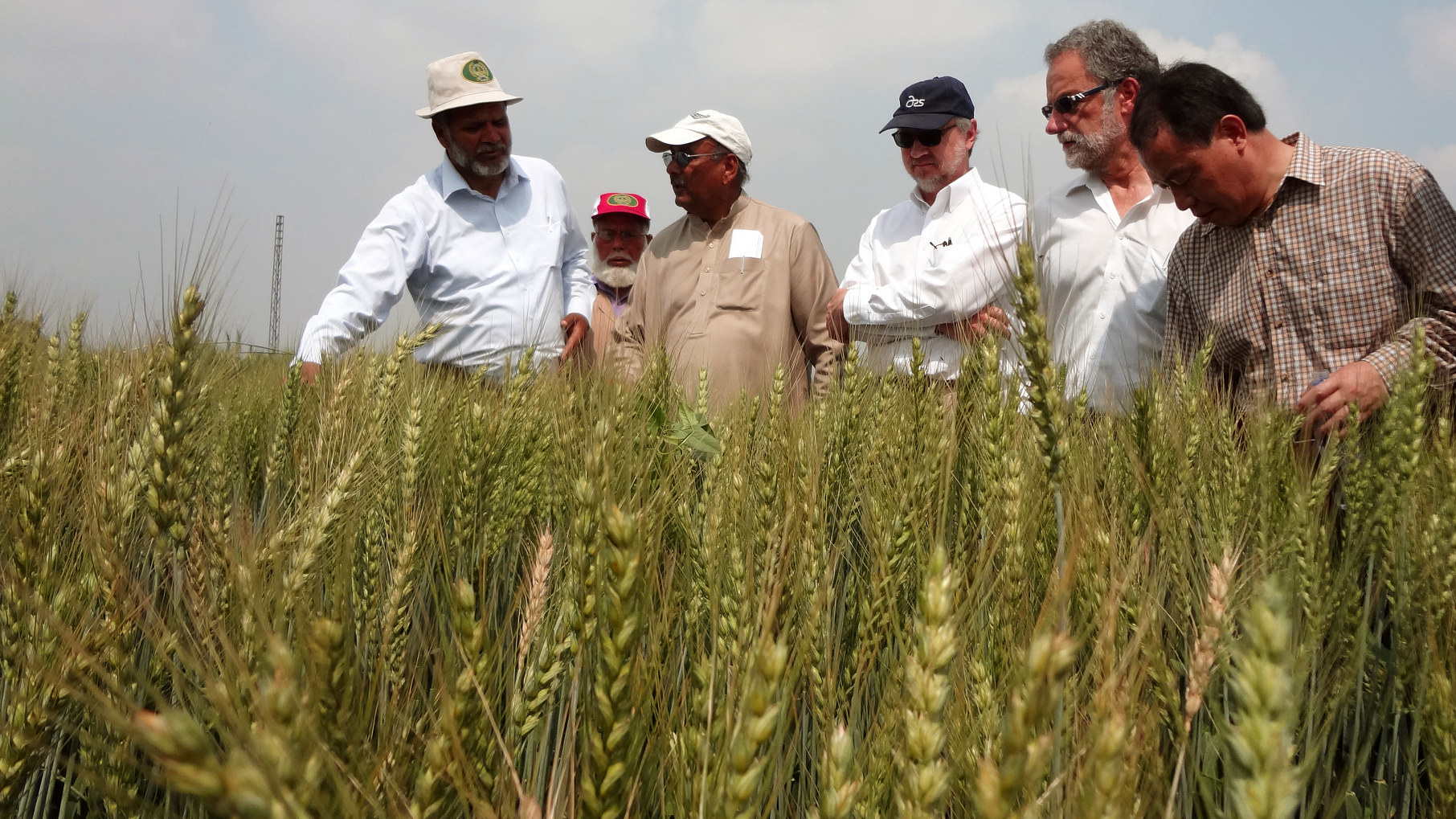 American scientists and Pakistani wheat experts in the field