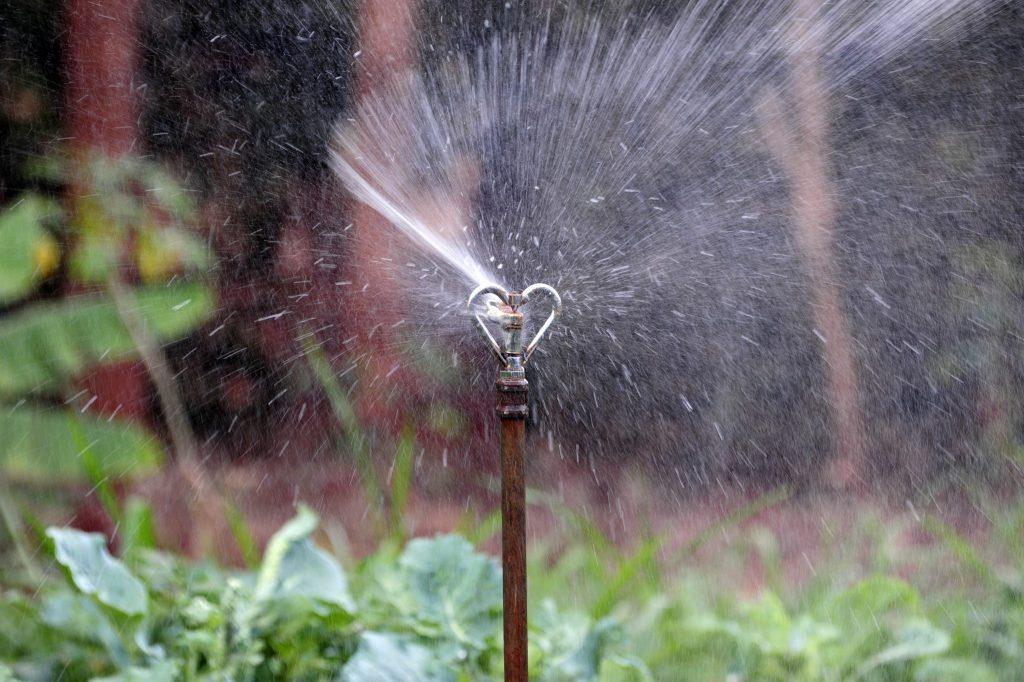 Vegetable irrigation system