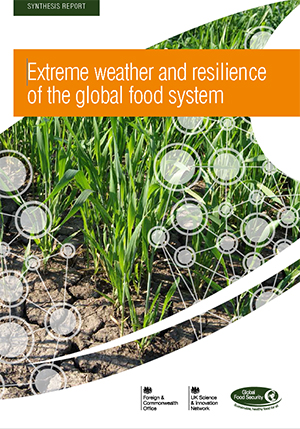 Extreme weather and resilience of global food system