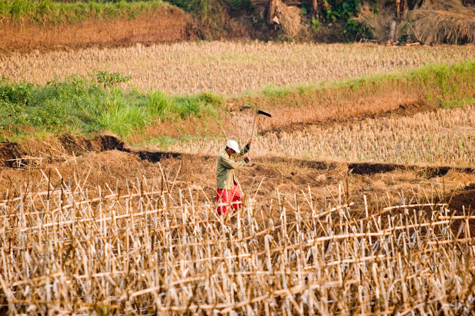 Dry fields, drought in Bogor Regency